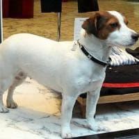 Veterinaria investe cane a Milano e non lo soccorre: segnalata all'ordine
