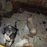 Scoperto e sequestrato canile lager nel Comasco: 33 animali liberati e affidati all'Enpa