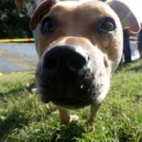 Animali, code e orecchie tagliate a 44 cani per motivi estetici: due condanne