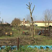 Il Comune non ha soldi, il sindaco del Cremonese taglia le piante del parco: