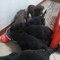 Dieci cuccioli da adottare, abbandonati vicino alla discarica