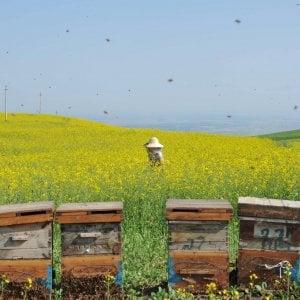 Mantova, maxi furto di api: sparite 300 arnie per un valore attorno ai 70mila euro