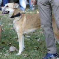 Dna del cane incastrerà chi non pulisce il marciapiede: nel Varesotto è guerra ai padroni distratti