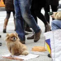 Milano, per i clochard anche un dormitorio aperto ai cani
