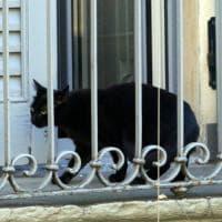 Milano, Enpa e vigili del fuoco salvano un gatto su un balcone