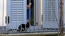 Il gatto resta bloccato sul balcone: salvato dai vigili del fuoco e dall'Enpa