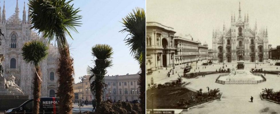 """Palme e banani in piazza Duomo, Milano divisa. E' già polemica: """"Follia neogotica"""" - Il sondaggio"""