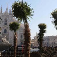 Palme e banani in piazza Duomo, Milano divisa. E' già polemica: