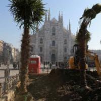 Palme in piazza Duomo a Milano, il caso diventa politico. Sala in consiglio: