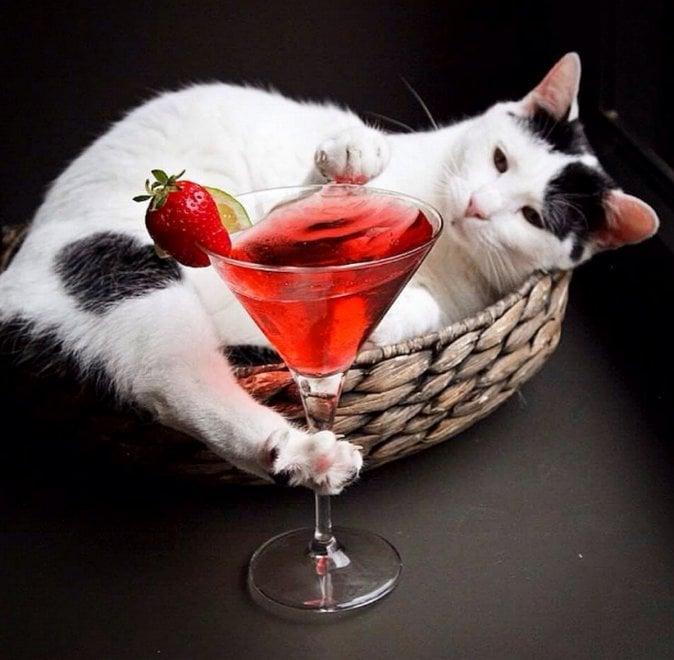 Milano, è la giornata nazionale del gatto: gli scatti più curiosi nel bar dedicato ai felini
