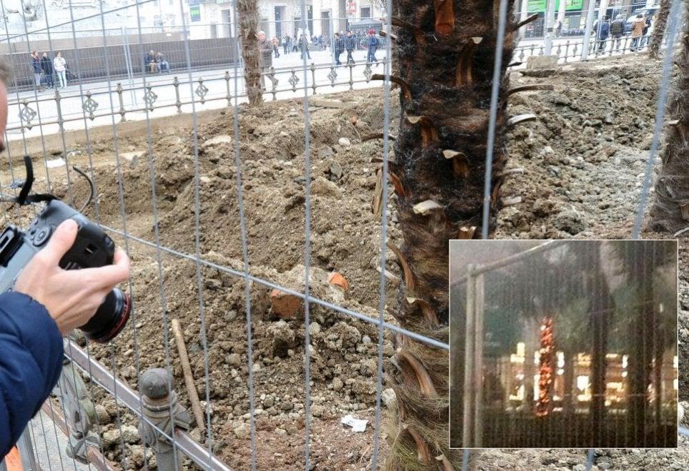 Palme in piazza Duomo date alle fiamme: bruciata una pianta, danni ad altre due