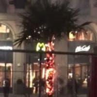"""Bruciata una delle palme in piazza Duomo, i vigili: """"Vandali filmati dalle telecamere"""""""
