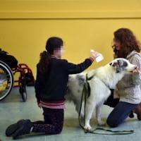 Milano, Zirca protagonista della pet therapy a scuola per aiutare i bambini in difficoltà