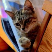Bergamo, tre anni e sei mesi di carcere più due anni di libertà vigilata al 'killer dei gattini'