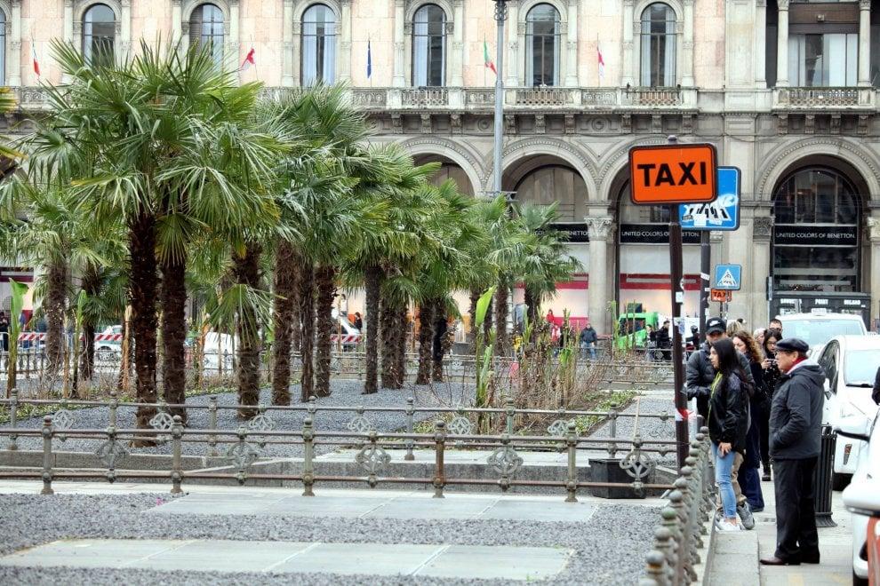 Palme in piazza Duomo, finiti i lavori: ecco l'aiuola, ora tocca alla primavera