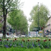 Milano, nascondeva hashish tra i rami degli alberi: arrestato il 'Tarzan' della droga