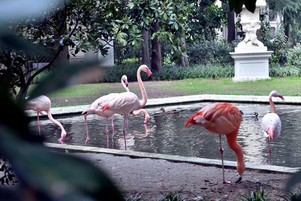 C'è un'oasi nel cuore di Milano, nel giardino segreto la meraviglia dei fenicotteri rosa