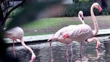 Curiosando nel giardino segreto, la meraviglia    dei fenicotteri rosa