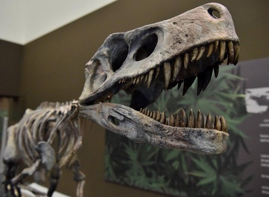 Milano, T Rex e i suoi fratelli: l'invasione dei dinosauri al Mudec