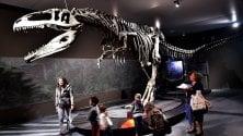 T Rex e i suoi fratelli  I dinosauri giganti  rivivono al Mudec