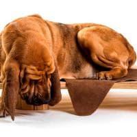 MIlano, Fuorisalone a quattro zampe: mobili di design per cani e gatti