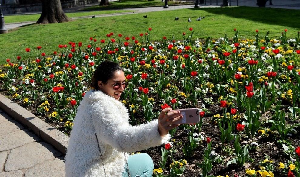 primavera spunta un tappeto di fiori colorati davanti alla basilica di Sant'Eustorgio