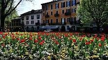 Spunta un tappeto di fiori colorati davanti alla basilica di Sant'Eustorgio