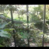 C'è un serpente in giardino: a Bernate avvistato un rettile lungo un metro e mezzo
