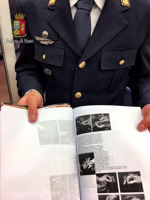 Milano, il manuale del giovane pusher di parco Sempione: così studiava per coltivare marijuana