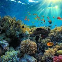 Nel profondo blu del Mar Rosso