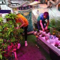 Cannabis day a Milano, interrogazione della Lega a Minniti: