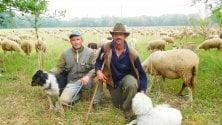 Da Bergamo alla Brianza  il viaggio dei due pastori con il loro gregge