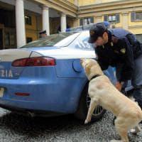 Milano, con i cani antidroga in classe: segnalato uno studente che aveva