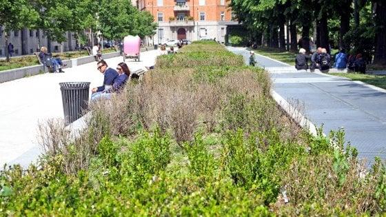 Milano, fiori secchi e erba alta: tra parchi e aiuole incolte il verde pubblico è andato in crisi