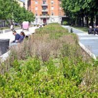 Milano, fiori secchi e erba alta: tra parchi e aiuole incolte il verde pubblico