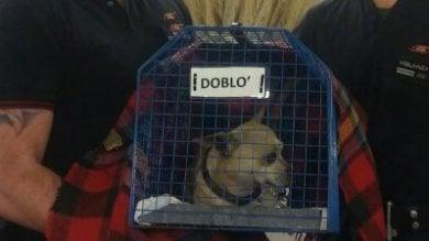 """""""Fermi tutti, c'è un cane in galleria"""" stop al metrò a Milano, bloccata la M3"""