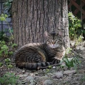 Lodi, uccide a fucilate la gatta del vicino: cacciatore condannato a due mesi