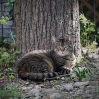 Lodi, uccide a fucilate la gatta del vicino: cacciatore condannato a due