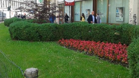 Milano, dalle palme in piazza Duomo all'aiuola sotto casa: 230mila metri di verde adottati dai privati