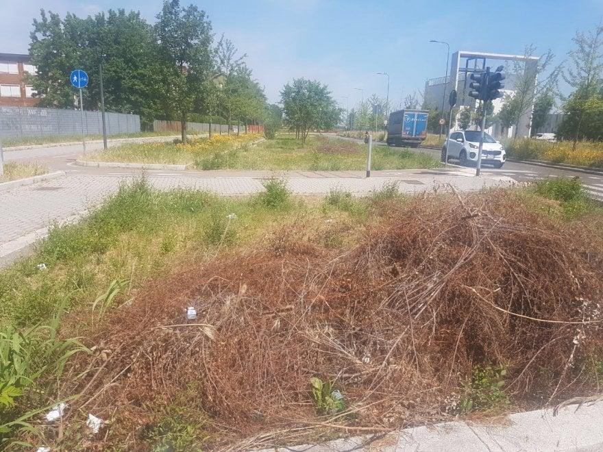 Milano, niente cura del verde pubblico: a Quarto Oggiaro l'sos sui social