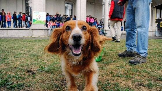 Milano, una settimana da cani: da domenica prossima gli amici a quattro zampe saranno protagonisti in città
