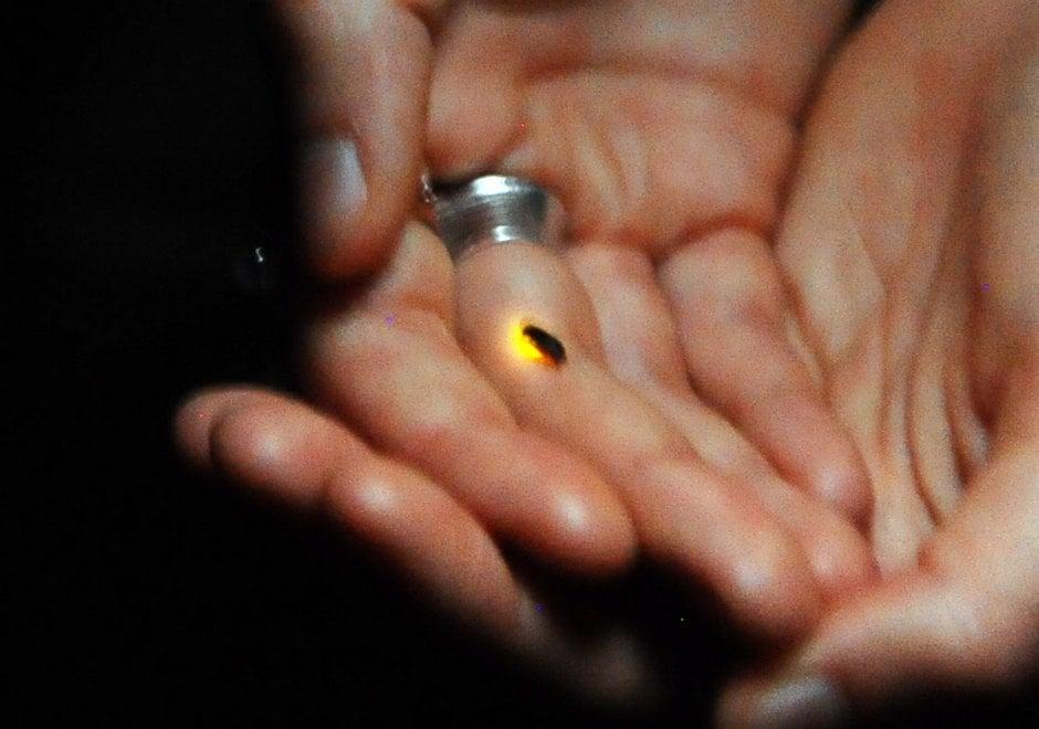Milano, le lucciole nel Parco delle Cave