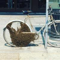Milano, diecimila api colonizzano bicicletta: scompiglio in corso Buenos Aires