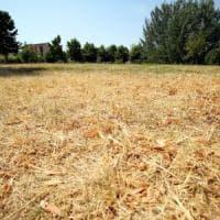 Emergenza siccità, agricoltori e allevatori lombardi in affanno e le piante vanno in...