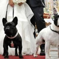 Bergamo, i cani di famiglia paggetti degli sposi. Il no del sindaco: