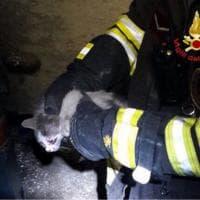 Milano, il gattino prigioniero nella tromba dell'ascensore: ci pensano i pompieri