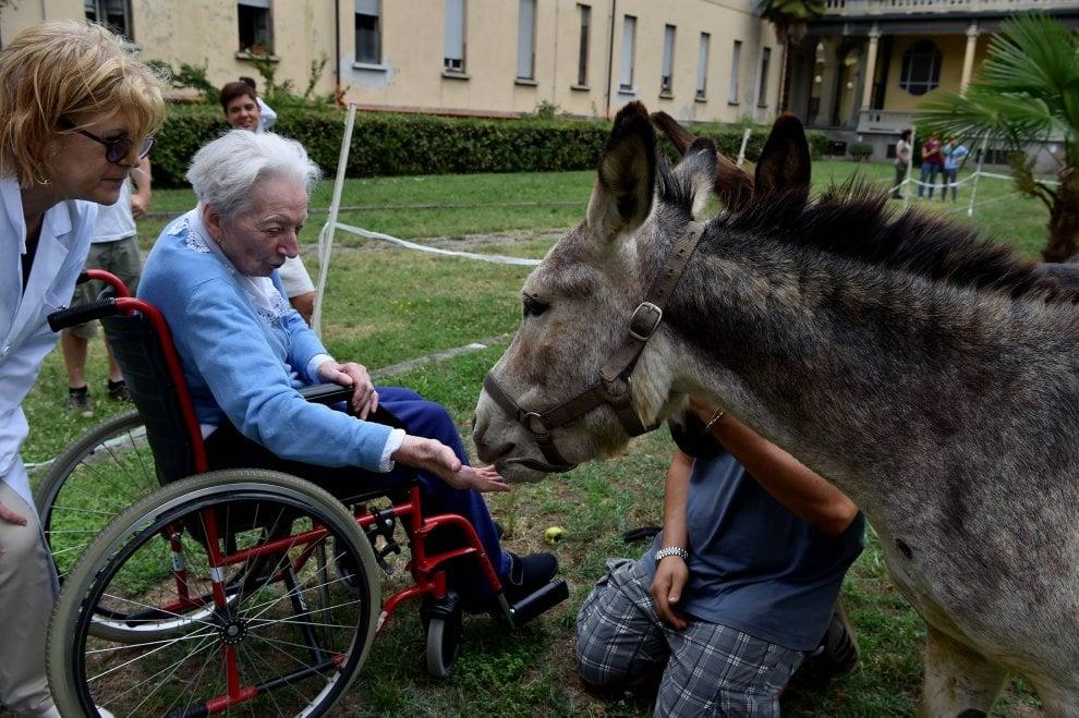 Milano gli asini nella casa di riposo cos gli anziani for Piccoli piani di casa per gli anziani