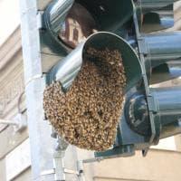 Milano, c'è un alveare sul semaforo: lo sciame di api blocca la circolazione
