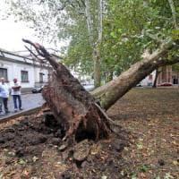 Milano, temporale e forte vento dopo il caldo record: alberi sradicati, una lamiera si stacca dal tetto in Galleria