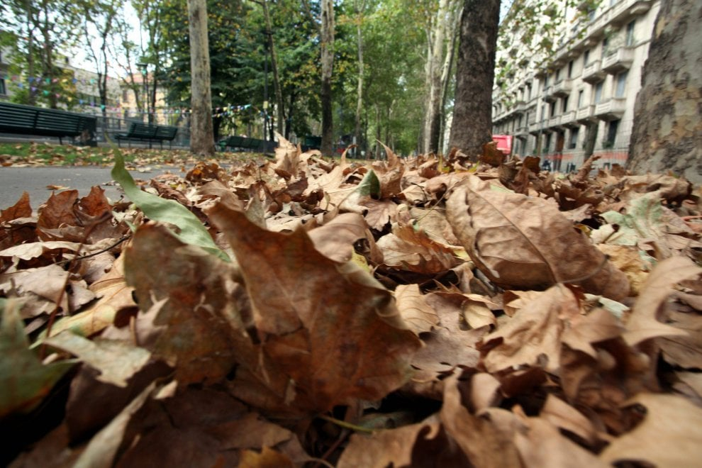 Milano, foglie morte nei parchi: e in agosto scatta 'l'effetto autunno'